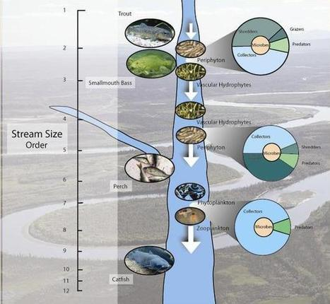 Rivers and Streams: Life in Flowing Water | Learn Science at Scitable | Rivers and Ponds | Scoop.it