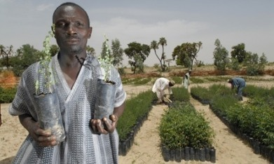 Small-scale farmers harvest against the odds in Niger | Agricultural Biodiversity | Scoop.it