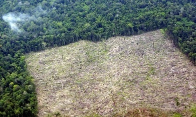 Rate of deforestation in Indonesia overtakes Brazil   Amazing Science   Scoop.it