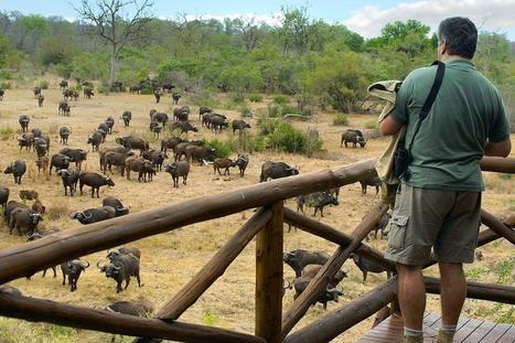 Kruger National Park   Rejser Afrika   Scoop.it