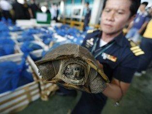 Centenares de animales protegidos son decomisados :: El Informador   Animales en peligro   Scoop.it