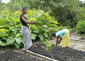 Empowering communities to combat deforestation | Bio { Cultural } Diversity | Scoop.it