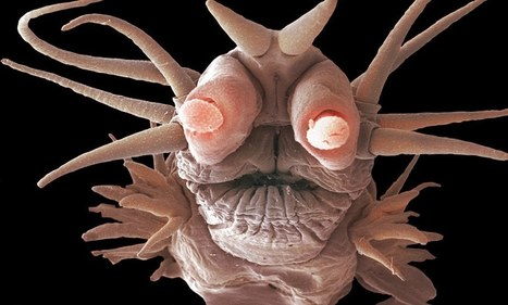 Monsters of the deep: Tiny sea creatures that never see sunlight look like they're from another planet | Teacher Tools and Tips | Scoop.it