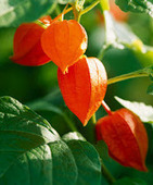 Gardens Inspired: Plants Toxic to Pets – Poisons in the garden | Family Pets | Scoop.it