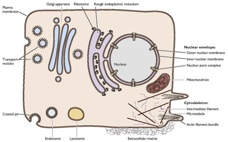 Influenza virus attachment to cells | MicrobiologyBytes | Scoop.it