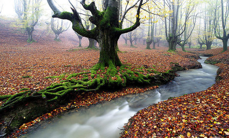 Most Beautiful Forests in The World | Agua | Scoop.it