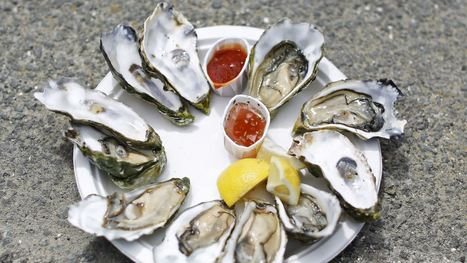 The world's scallops and oysters are mysteriously dying out. | Sustain Our Earth | Scoop.it