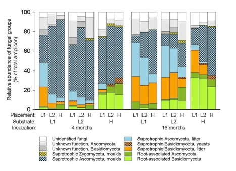 Mycorrhizal and saprotrophic fungal guilds compete for the same organic substrates but affect decomposition differently | MycorWeb Plant-Microbe Interactions | Scoop.it