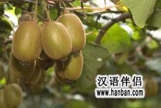11 Popular Fruits in South China_Chinese Language Companion - HanBan.com | Social Studies 7 Resources | Scoop.it