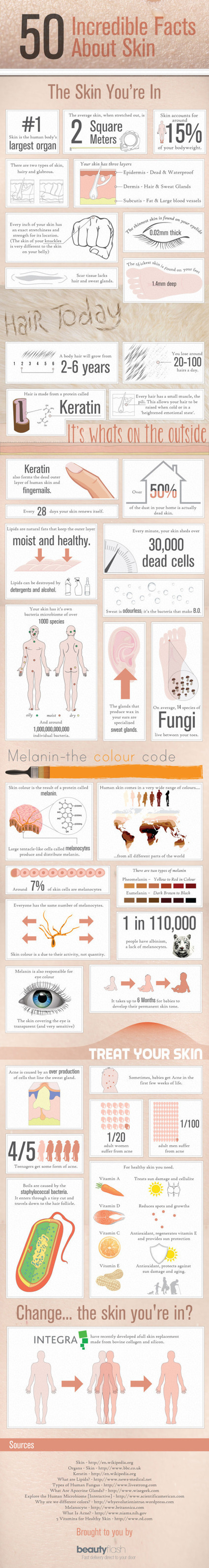 50 Incredible Facts About Skin - Blog About Infographics and Data Visualization - Cool Infographics | Infographics ideas for Education | Scoop.it