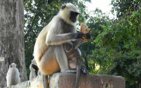 A wildlife photo from Rajasthan | Citizen Journalist(CJ) | Amazing Rare Photographs | Scoop.it