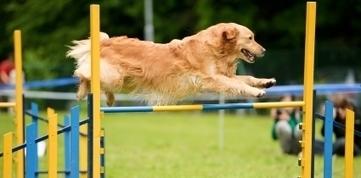 Dog Barking   Dog Training Pros   Scoop.it