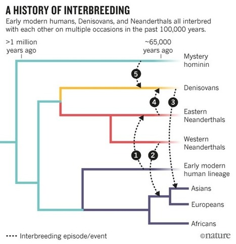 Evidence mounts for interbreeding bonanza in ancient human species | Genetic engineering and Human genetics, background reading and resources for IB | Scoop.it