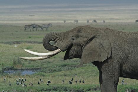 Update from Last Week's Ivory Summit in London   GarryRogers NatCon News   Scoop.it
