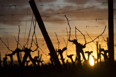 Mise en ligne du site Internet Bordeaux Vinipro | Agence Fleurie | Agriculture en Gironde | Scoop.it