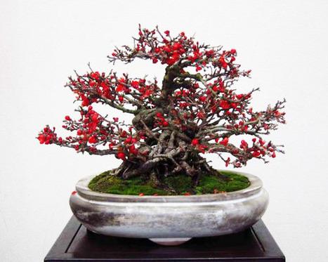 Tea Flowers - Bonsai Bark | Bonsai | Scoop.it