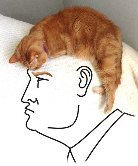 A Closer Look: Buffalo illustrator's feline Donald Trump illustration - Buffalo.com | HCA Illustration | Scoop.it