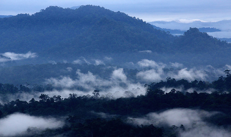 To define future of forests, first define 'forests' | Forest | Scoop.it