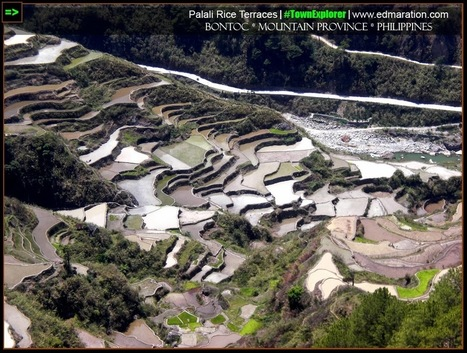 EDMARATION #TownExplorer: Palali Rice Terraces: Of First-time Penetration, Pain & Pleasure   #TownExplorer   Exploring Philippine Towns   Scoop.it