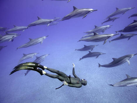 Freedivers explore ocean without scuba gear, on one breath | All about water, the oceans, environmental issues | Scoop.it