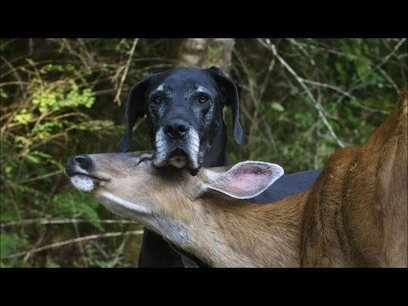NATURE | Animal Odd Couples | Kate and Pip | PBS - Mashpedia VideoPlayer | Videos | Scoop.it