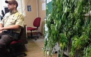 Thirty-six marijuana plants found in Tomahawk community | How Cannabis Will Change the World! | Scoop.it