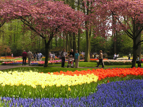Keukenhof Lisse, flowerpark | Full Fridge Free Guide to Amsterdam | Scoop.it