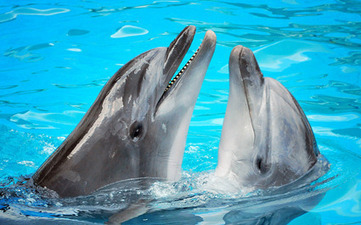 Dolphins reject human status   A Sense of the Ridiculous   Scoop.it