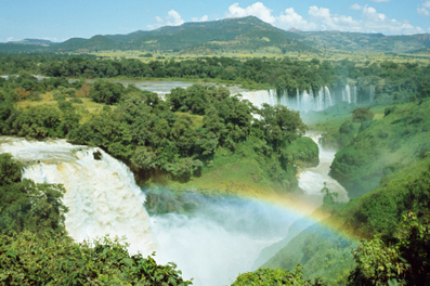 Five Rainforest 'Ecosystem Services' that Nourish People and the ... | Unit3.Ecosystems | Scoop.it