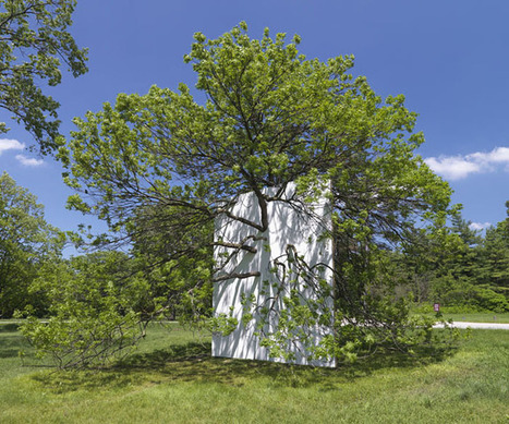 Letha Wilson: Wall in Blue Ash Tree | Art Installations, Sculpture, Contemporary Art | Scoop.it