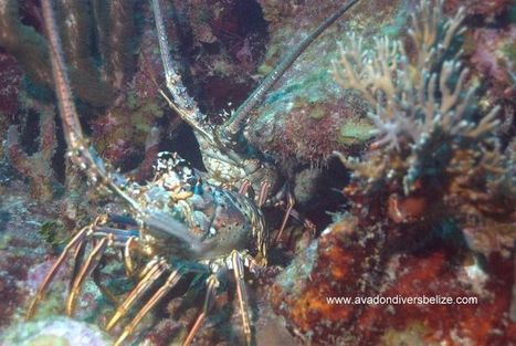 Photograph from Avadon Divers | Belize in Social Media | Scoop.it