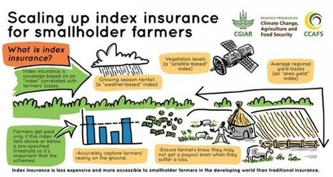 How can index insurance help smallholder farmers? Check out this infographic | CCAFS: | Building community resilience | Scoop.it
