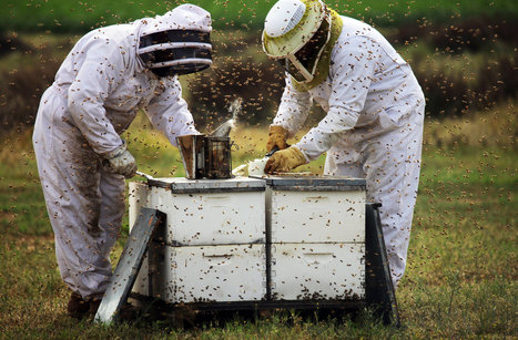 Soaring Bee Deaths in 2012 Sound Alarm on Malady | Content Ideas for the Breakfaststack | Scoop.it