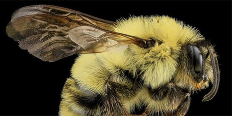 Gardening for the Bees   Science Blogs   WIRED   Beekeeping   Scoop.it