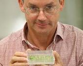 Genetic discovery to keep crops disease-free | Sustain Our Earth | Scoop.it