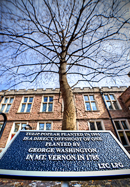 Descendant of George Washington's tree alive and well on Washington University's campus | Washington University in St. Louis | Tree Campus USA | Scoop.it