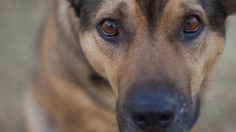 Russian 'dog hunters' wage death campaign on strays | The Raw Story | Animal Cruelty | Scoop.it