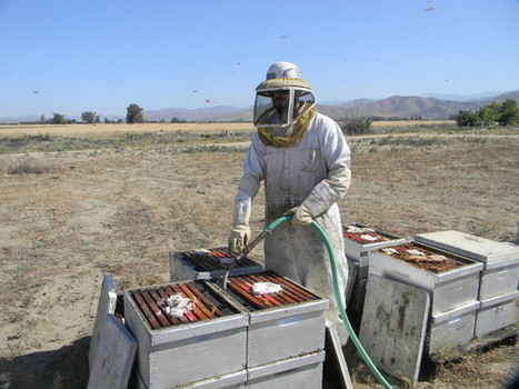 California Drought Dries Up Honey Supply | Sustain Our Earth | Scoop.it
