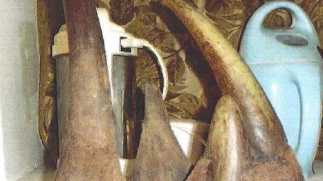 Guilty Plea in Farflung Wildlife Trafficking Case   Help save our Rhinos   Scoop.it