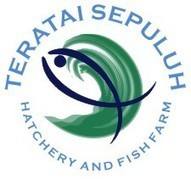 TERATAI SEPULUH Hatchery and Fish Farm: Breeding Barramundi ... | Hatchery Central | Scoop.it