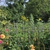 Jardins ouvriers ou les petits bonheurs marseillais | Culture et Environnement | Scoop.it