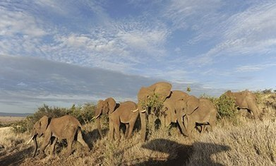 British army joins fight against elephant and rhino poaching | Military | Scoop.it