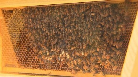 Mass. Environment Group Warns: No Bees Means No Food | Bees and beekeeping | Scoop.it