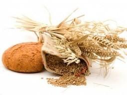 Gluten free grains - About Grain | Living Gluten free | Scoop.it