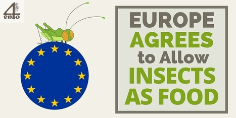 Europe Agrees to Allow Insects as Food - #4ento | Entomophagy: Edible Insects and the Future of Food | Scoop.it