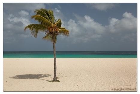 Aruba weer & klimaat   Het Caraïbisch gebied, vergrijzing en wat extraatjes   Scoop.it