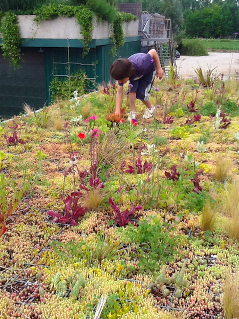 Phyto Kinetic: Green Roofs for City Buses and Improved Urban Ecosystem | Urban Gardens | Urban Gardens | Scoop.it