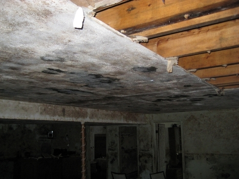 Blog - Mold Removal | Mold Removal | Scoop.it