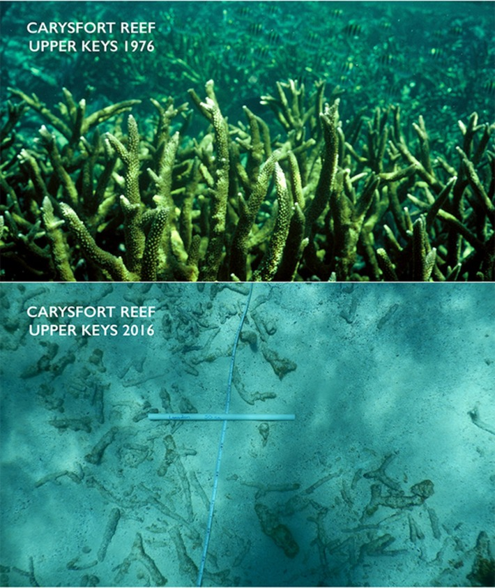 New study found ocean acidification may be impacting coral reefs in the Florida keys | Océan et climat, un équilibre nécessaire | Scoop.it