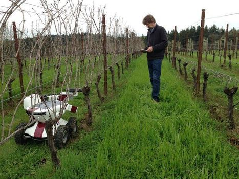 French vineyard robot has a vine time in Oregon wine country - The Oregonian | Quirky wine & spirit articles from VINGLISH | Scoop.it